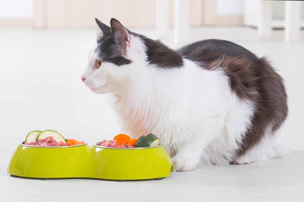 homemade-cat-food-recipes