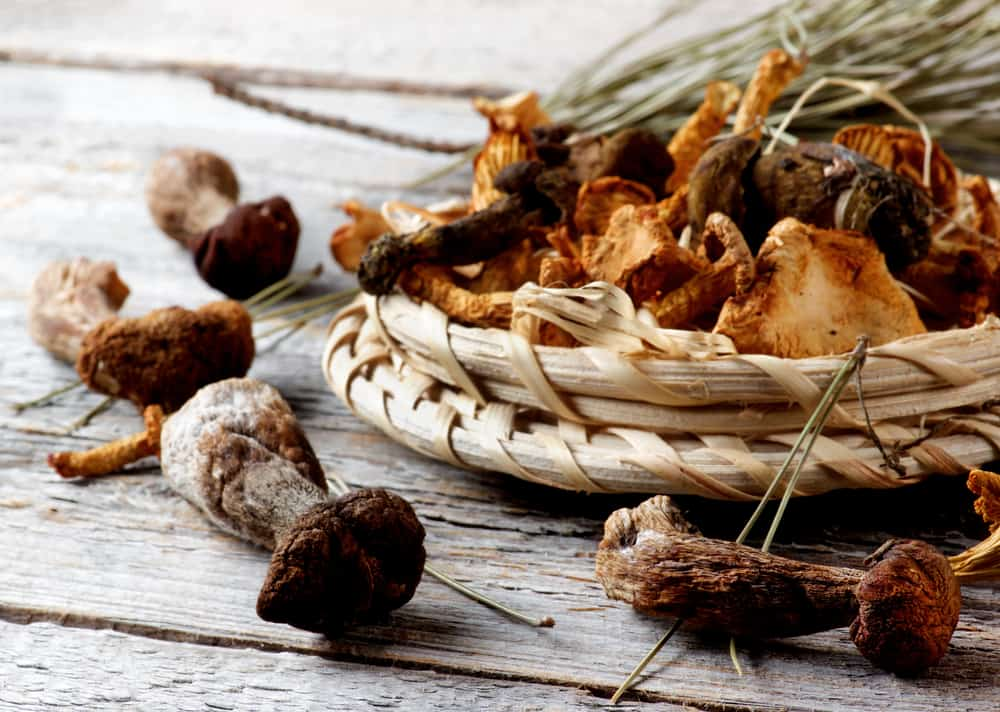 storing dried mushrooms